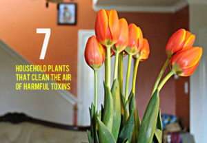 7 household plants that clean the air of harmful toxins-facebook