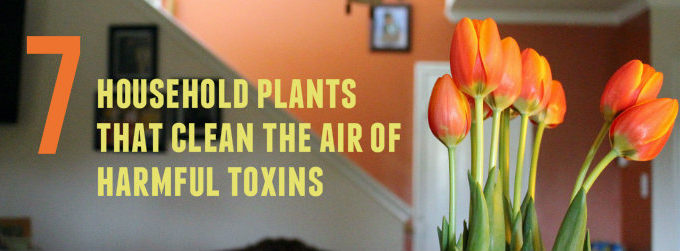 7 household plants that clean the air of harmful toxins