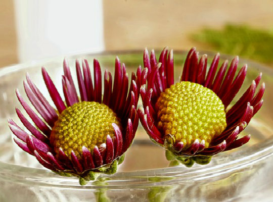 7 household plants that clean the air of harmful toxins-garden-mum