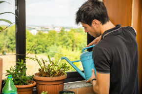 7 household plants that clean the air of harmful toxins-man watering plants